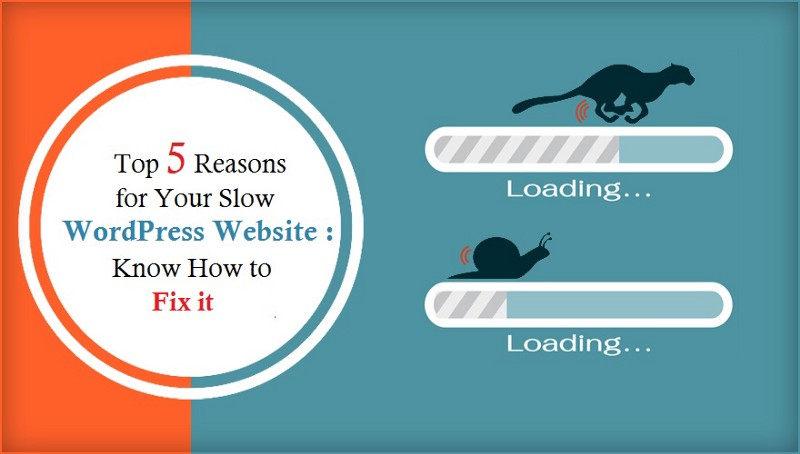 Top 5 Reasons For Your Slow WordPress Website: Know How to Fix It